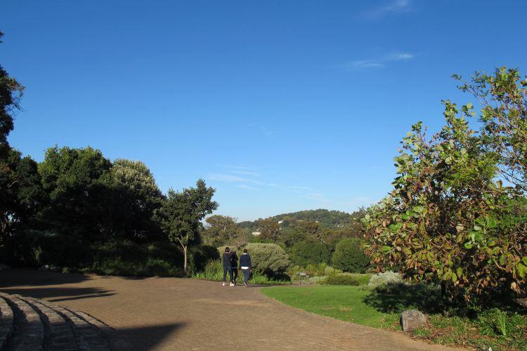 康斯坦博西植物園2