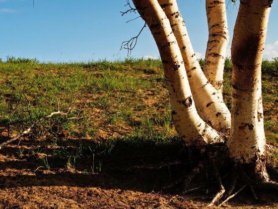 烏蘭布統草原