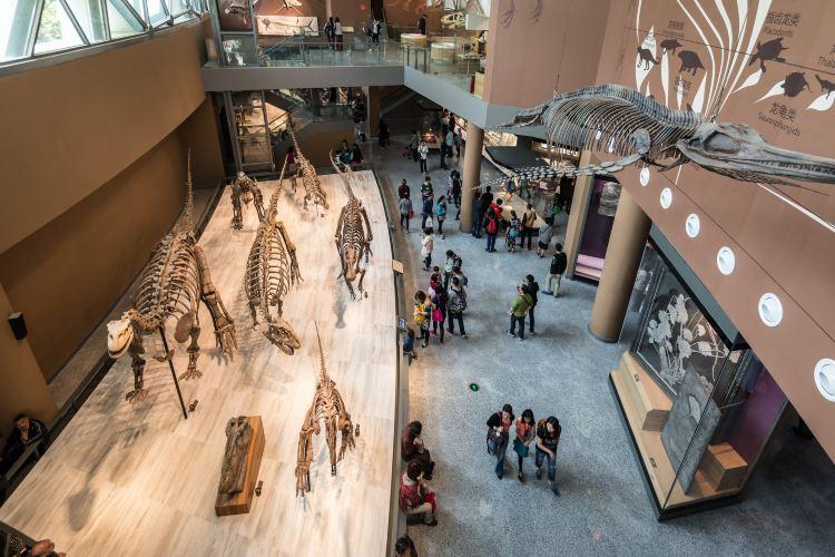 상하이 자연사 박물관2