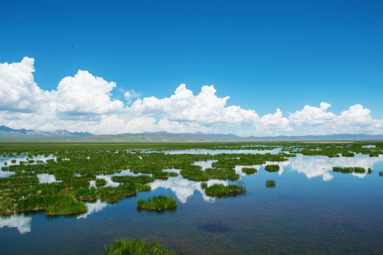 Zoige Flower Lake3