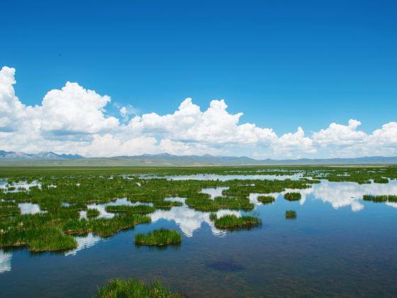 Zoige Flower Lake