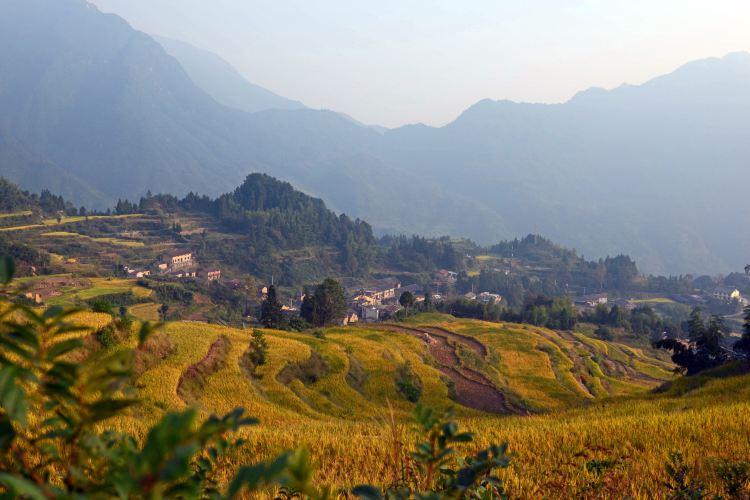 Yunhe Rice Terraces2