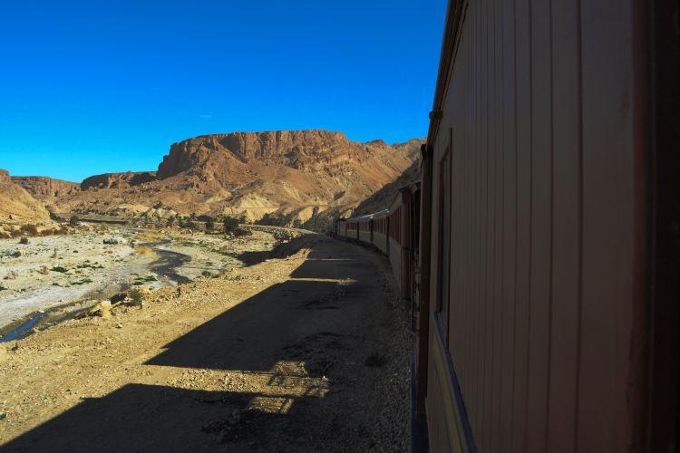 紅蜥蜴列車1