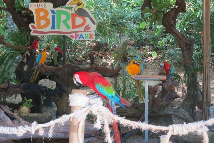 布吉百鳥園3
