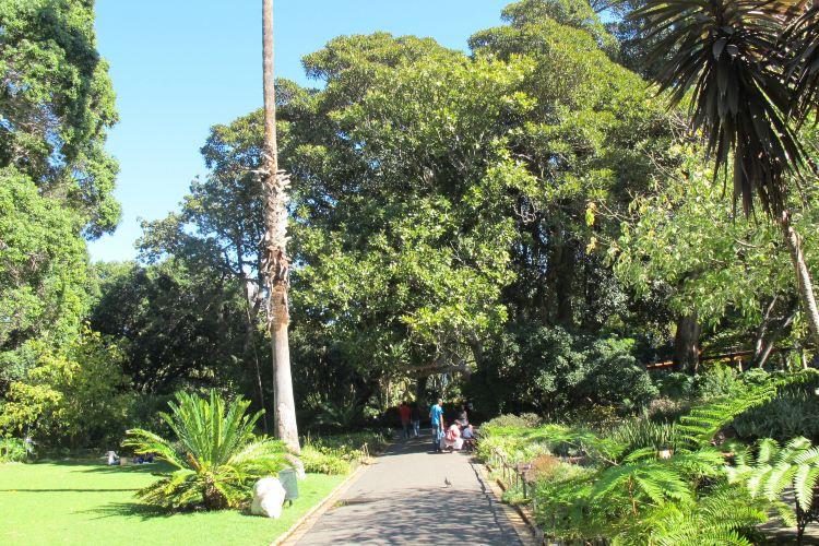 街心花園2