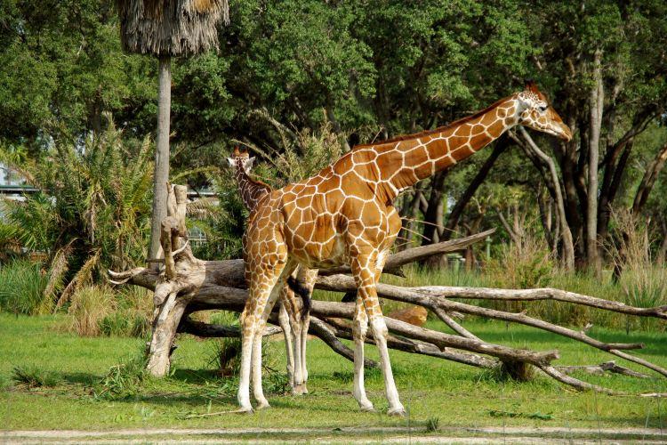 Disney Animal Kingdom4