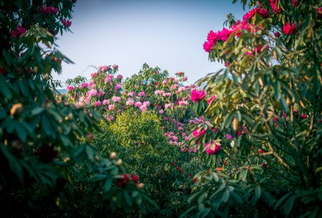 """Baili Dujuan (""""Hundred Miles of Rhododendrons"""") Scenic Area"""
