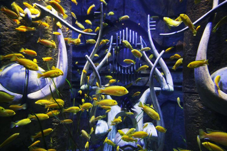Atlantis, The Palm Island3