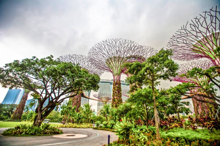 Gardens by the Bay3