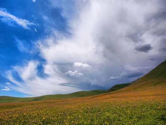 鞏乃斯草原