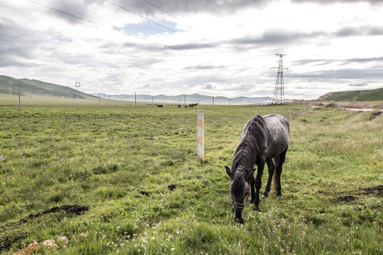 紅原—若爾蓋大草原4