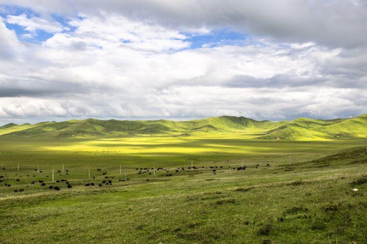 紅原—若爾蓋大草原2