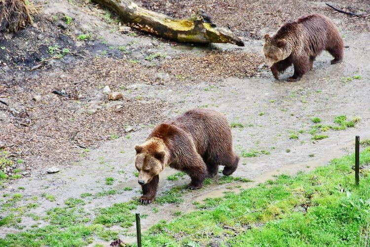 Bear Park1