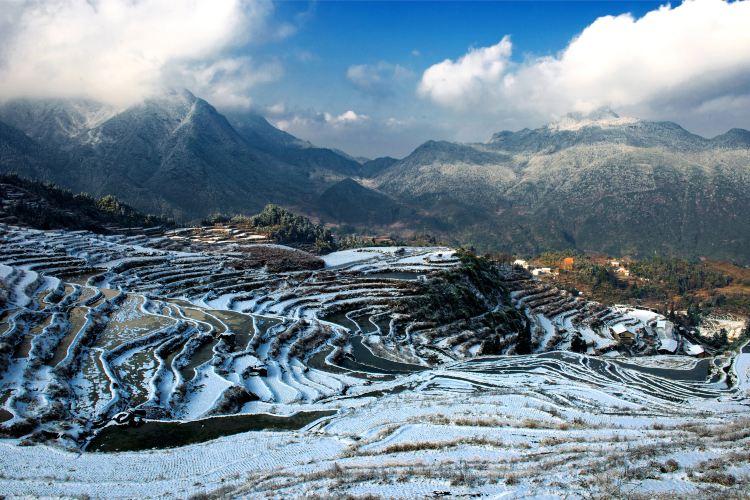 Yunhe Rice Terraces1