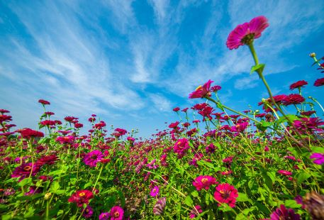 Weiran Flower Field