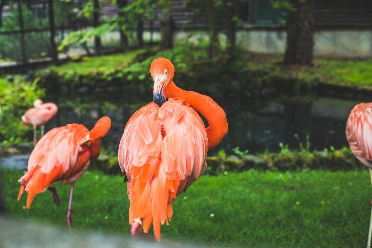 旭山動物園3
