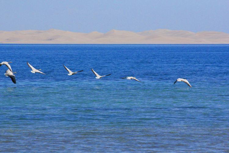 青海湖沙島3