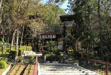 Dongshi Forest Garden
