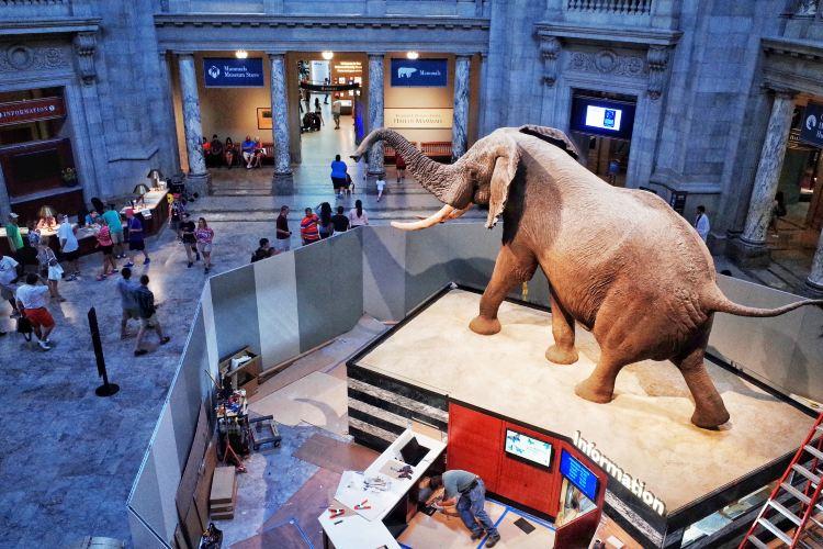 美國自然歷史博物館3