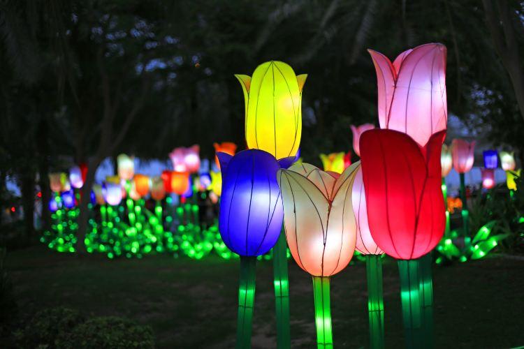Dubai Garden Glow4