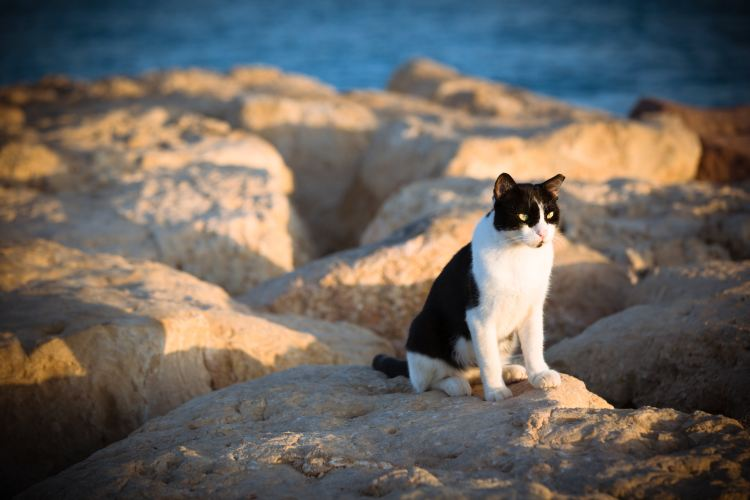 Eilat Marina4