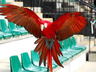 澳洲動物園