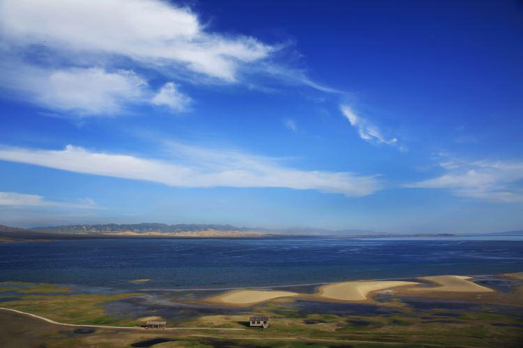 青海湖沙島4