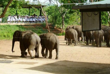 烏達瓦勒韋大象之家