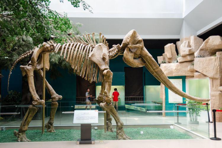甘肅省博物館3