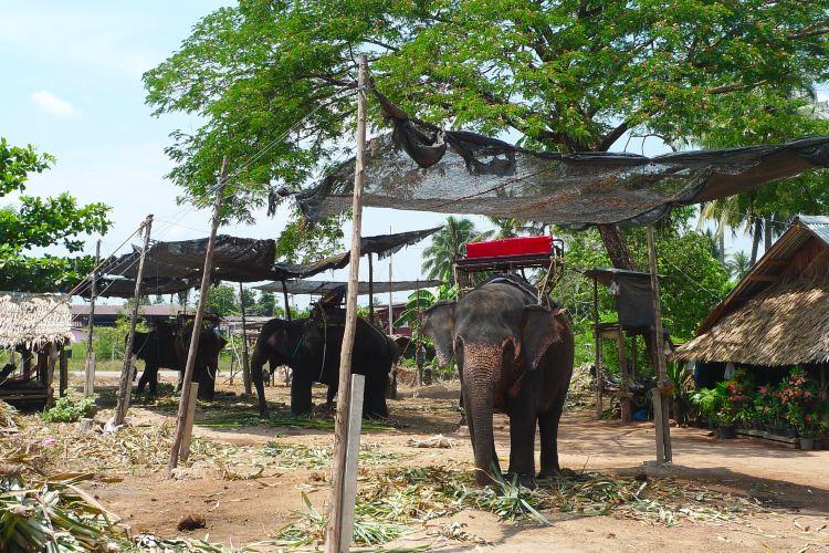Pattaya Elephant Village1