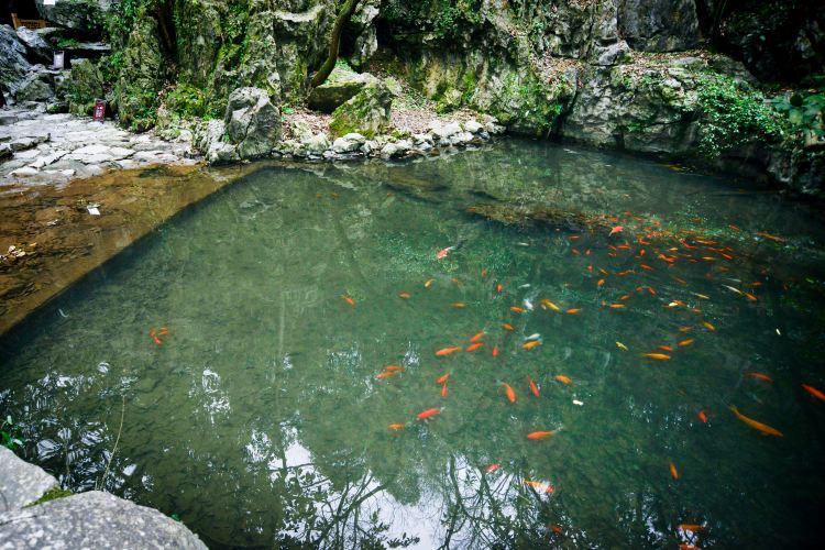 Hangzhou Lingyin Temple and Feilai Peak Scenic Spot3