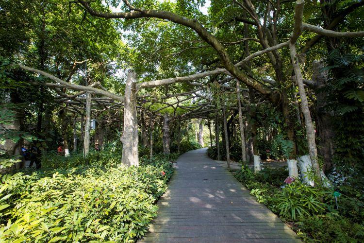 Guangxi Medical Botanical Garden2