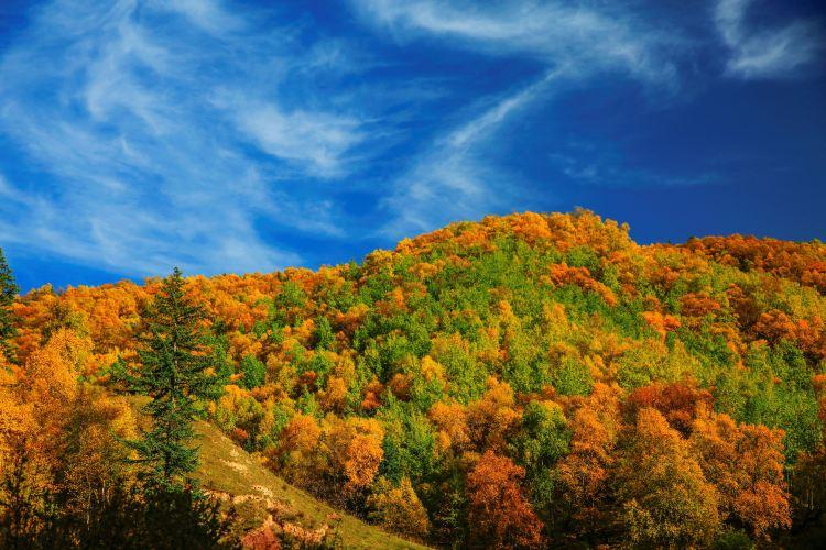 칸불라 국가삼림공원3