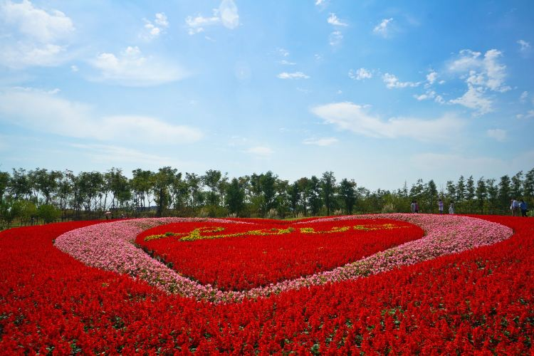 Zhoupu Sea of Flowers3