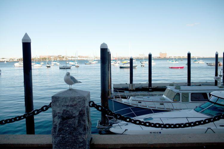 波士頓海灣4