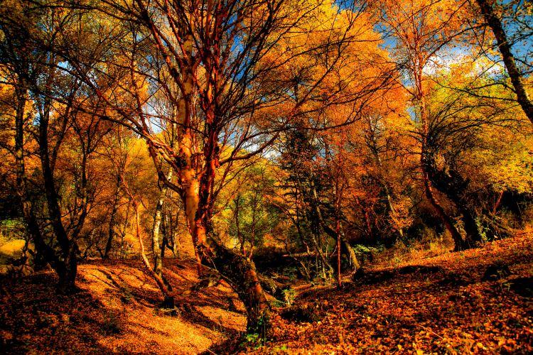 칸불라 국가삼림공원2