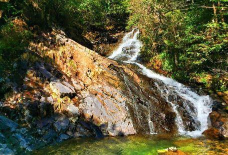 Baishanzu Scenic Area
