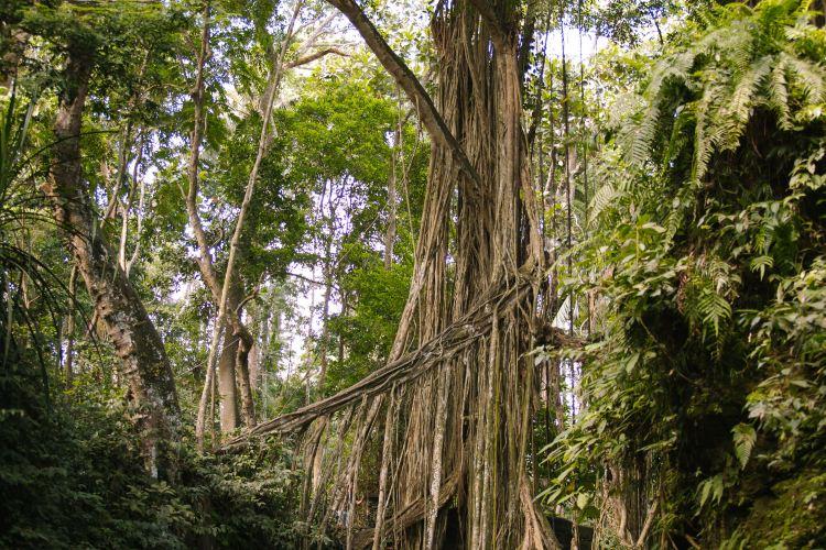 Ubud Monkey Forest4