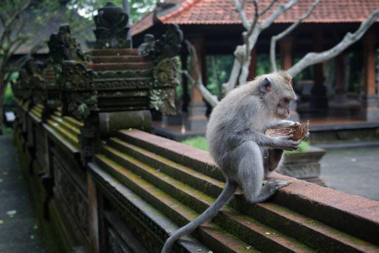 Ubud Monkey Forest1