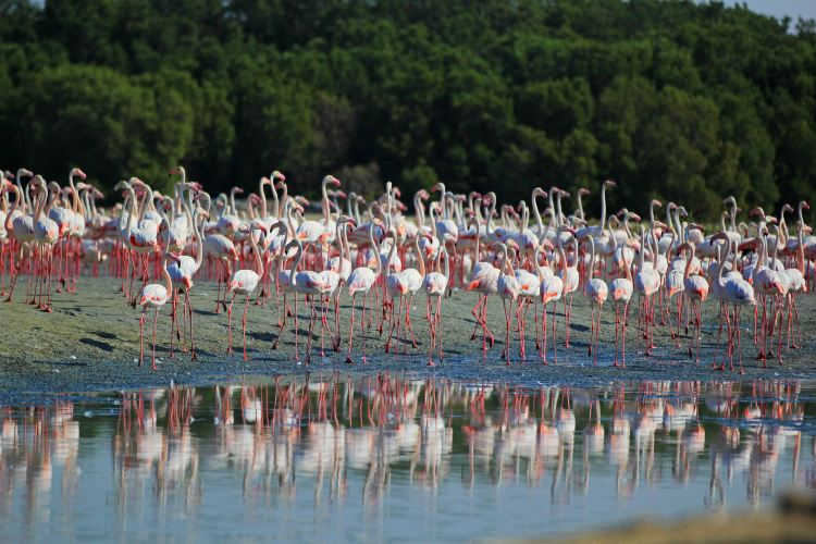 Ras Al Khor Wildlife Sanctuary1