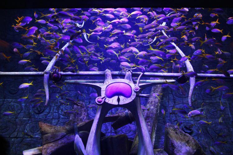 The Lost Chambers Aquarium2
