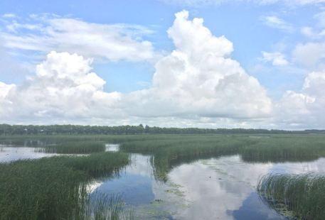 Fujin National Wetland Park