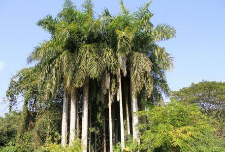 Redai Botanical Garden