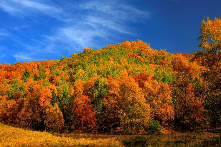 칸불라 국가삼림공원4