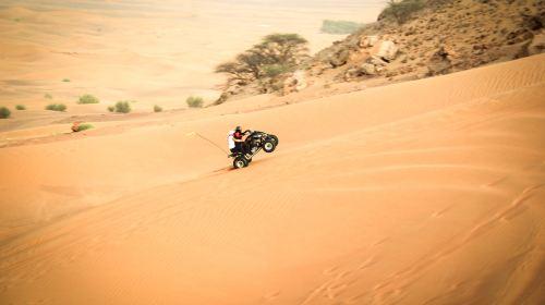 사막 사파리