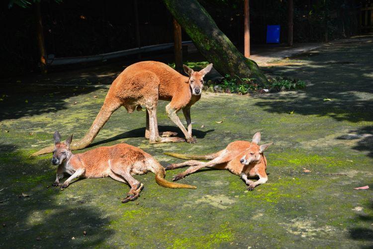 福州動物園1