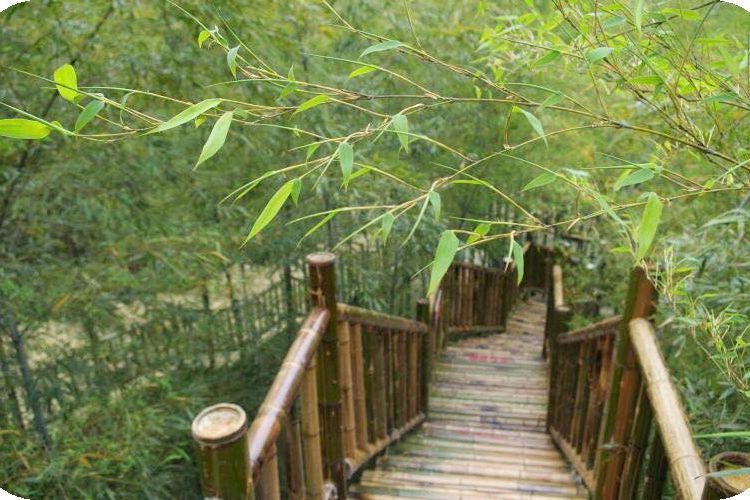 Bamboo Glass Walkway1