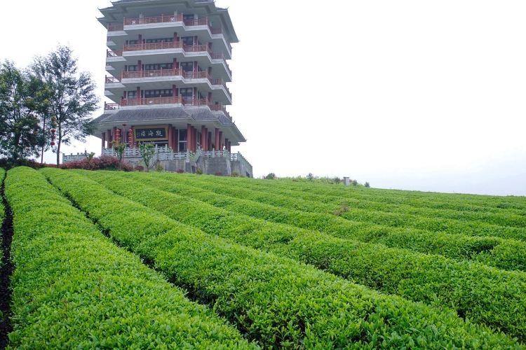 中國茶海景區2
