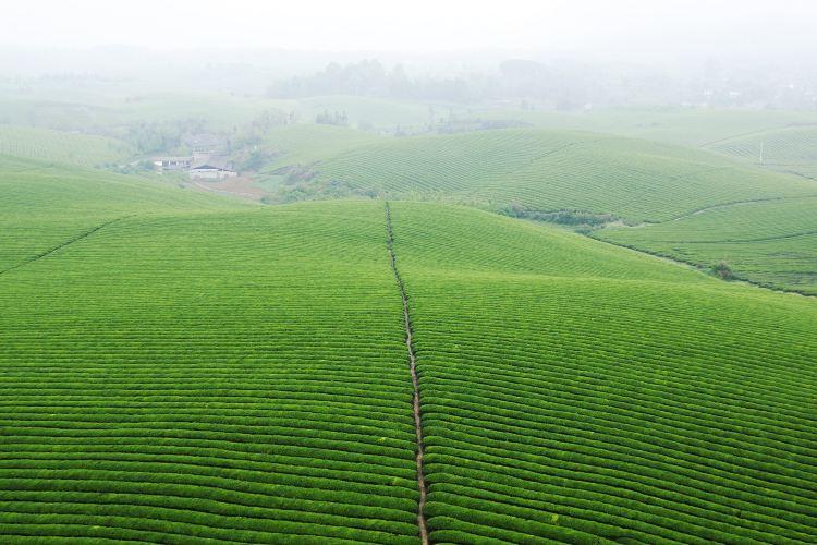 中國茶海景區3