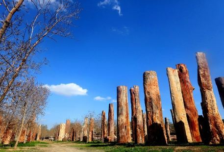 新疆古生態園